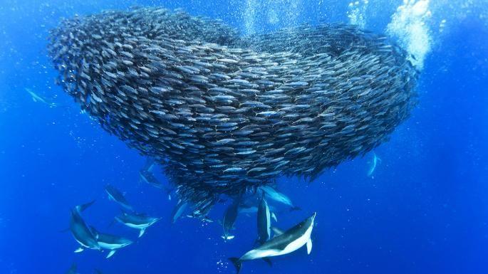 Σχηματισμος Ψαριων