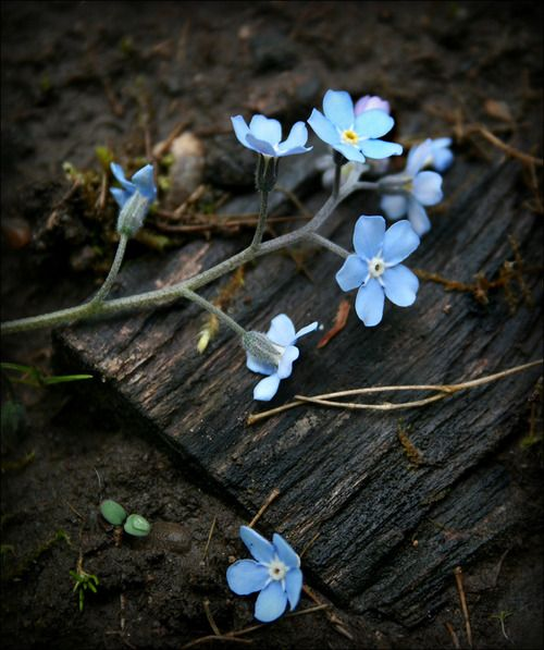 Silently.. in the infinite meadows of heaven, blossomed the lovely stars, the forget-me-nots of the angels. ~ Henry Wadsworth Longfellow