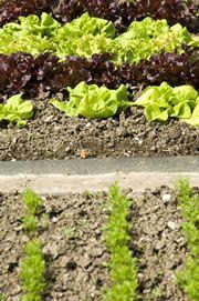 Webportal på tysk, hausgarten.net, Wachstum im Gemüsegarten