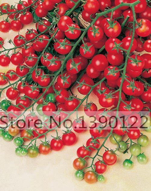 100-sementes de tomate da herança Grega doce sementes de jardinagem plantas non gmo vegetais sementes para o plantio de jardim de casa