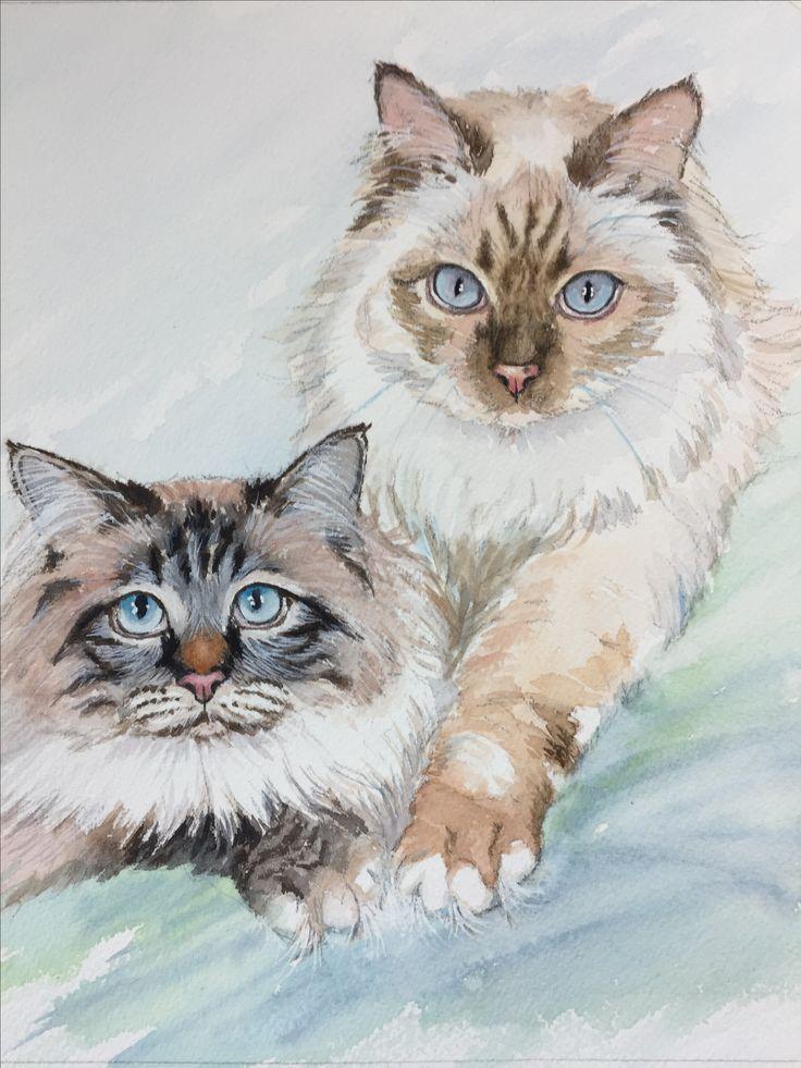 Koko & Kati Ragdoll litter mates. Watercolor painting