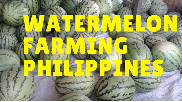 watermelon farming philippines