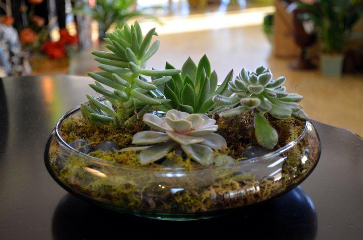 11 best images about inside gardens on pinterest gardens for Succulent dish garden designs