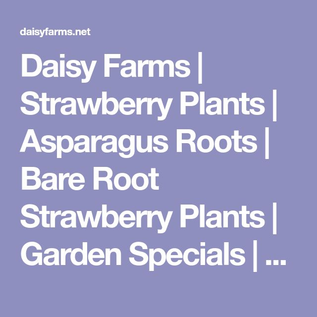 Daisy Farms   Strawberry Plants   Asparagus Roots   Bare Root Strawberry Plants   Garden Specials   Wholesale Plants