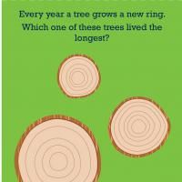 Science & Math: Tree Rings