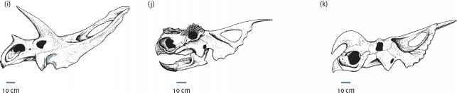 Marginocephalia Ceratopsia horns and all the frills - Dinosaurs History