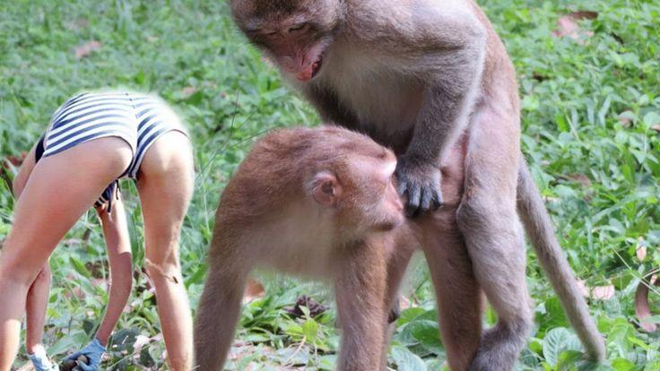 Pin On Meeting Monkey-5639
