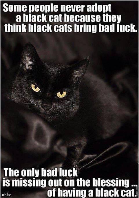 Some people think black cats are bad luck. The only bad luck is missing out on the blessing of adopting a black cat.