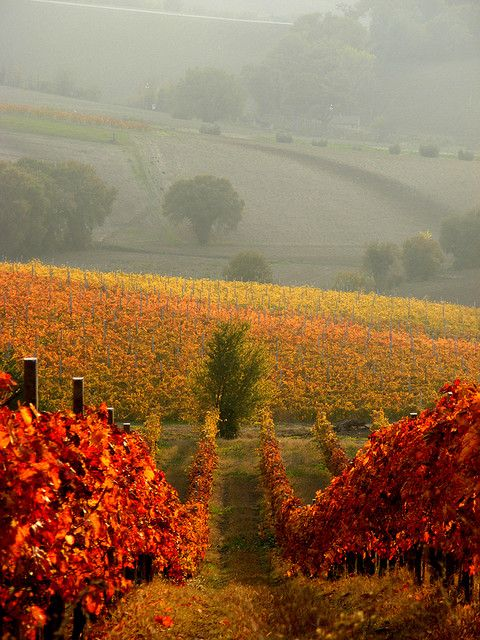Autumn at Rosso Conero Winery ~ central part of the Marche region of Italy just south of Ancona on the slopes of Monte Conero, Italy.