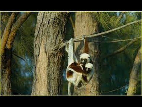 Watch Island of Lemurs Madagascar 2014 Online Movie Free Streaming Onlin...