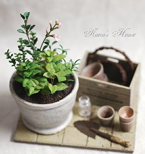 plants...for my garden room