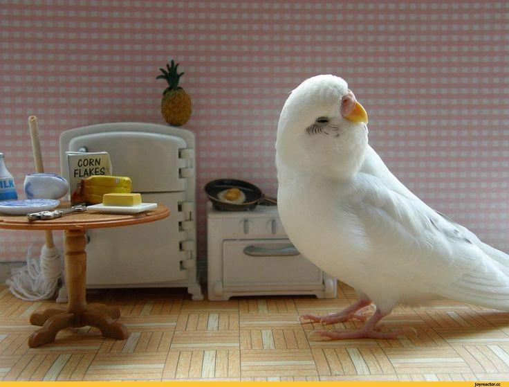 """Как правильно кормить волнистого попугая?  В Интернет-зоомагазине """"ЗООГРАД"""" можно приобрести разнообразные зерновые смеси для птиц. В состав зерновых рационов входят семена подсолнечника, овес, просо, канареечное семя, а также другие злаки. Ознакомиться с ассортиментом и приобрести корм можно тут👉 https://www.zooizh.ru/katalog/tovary-dlya-ptic/korm-d..  #зооград #zooizh #товарыдляптиц #волнистыйпопугай  👆Внимательно осматривайте купленный корм перед тем, как предложить его питомцу. В нем…"""
