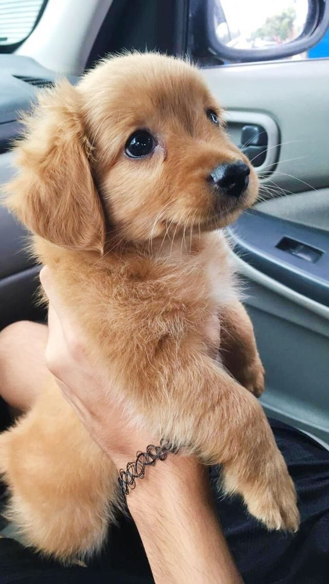 Here S Your Weekly Dose Of Cute 33 Cute Little Puppies Cute Puppies Cute Dogs