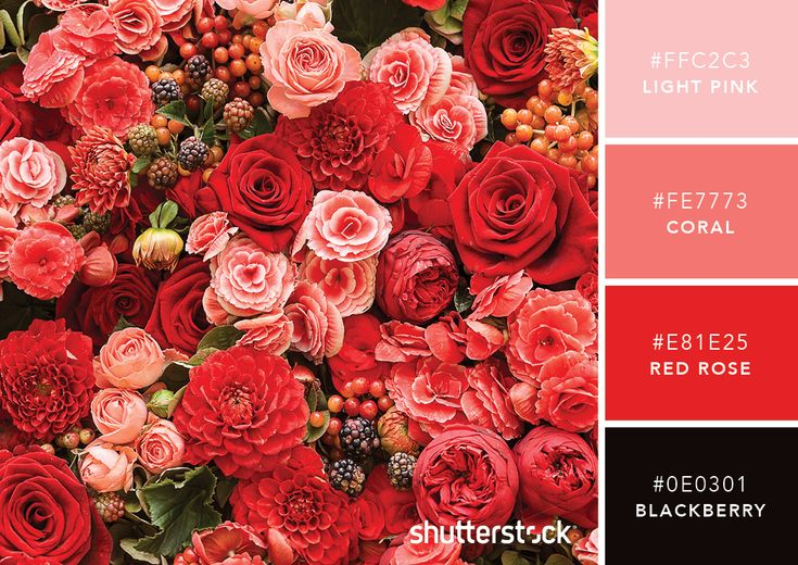 101 Color Combinations to Inspire Your Next Design – Rosy Red Color Palette