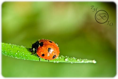 How to macro photography with Canon Rebel T5 –