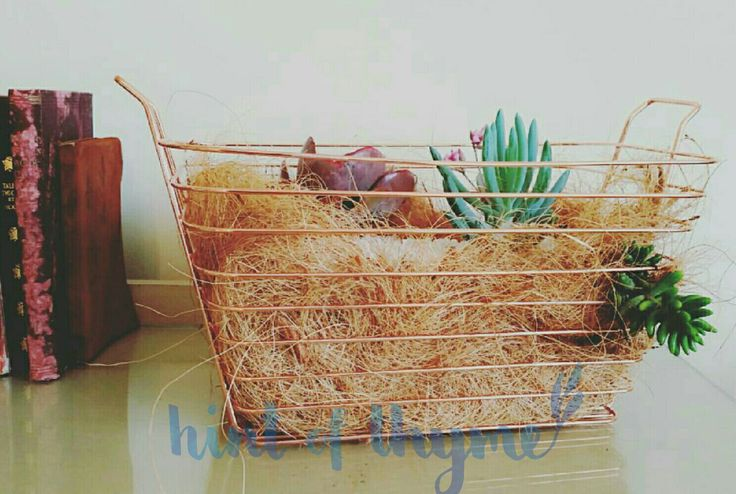 Gorgeous copper basket with a succulent garden 😍