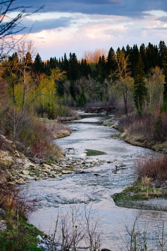 Fish Creek - a provincial park in SE/SW Calgary. Gorgeous and enjoyable all year round.