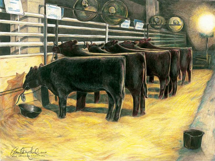 112 best Angus Pictures images on Pinterest | Cattle, Cow ...