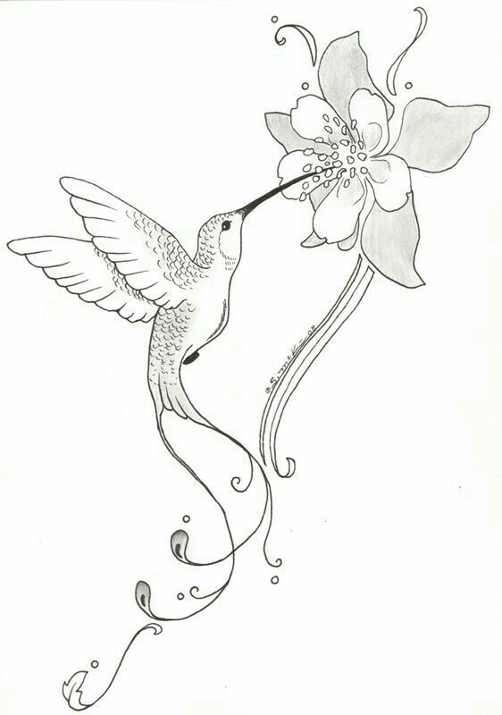 Колибри на цветке картинка карандашом