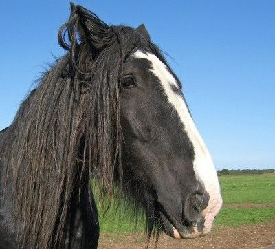 Making And Using Horse Manure Compost - Horse manure is a good source of nutrients and a popular addition to many home gardens. Composting horse manure can help your compost pile become super charged. Let's look at how to use horse manure as fertilizer and in the compost pile