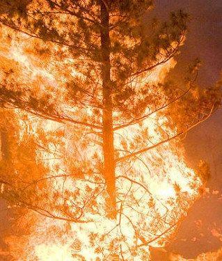 """""""Powietrze drgało od gorąca"""". Minęły 23 lata od wielkiego pożaru w Puszczy Noteckiej. http://tvnmeteo.tvn24.pl/informacje-pogoda/polska,28/powietrze-drgalo-od-goraca-minely-23-lata-od-wielkiego-pozaru-w-puszczy-noteckiej,175774,1,0.html"""