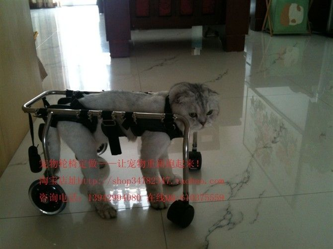 Cats Wheelchair Cost Cat Wheelchair Disabled Pet