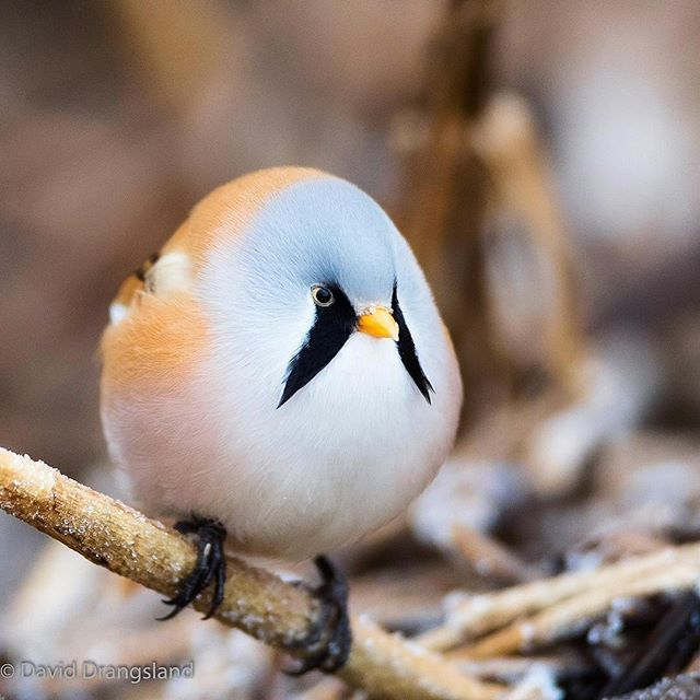 Photo by @bird_drangsland check out his feed for more! #WildlifePlanet