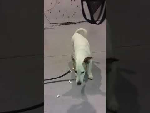Adopción urgente para evitar entrar en la perrera.  https://youtu.be/fOgkisc5-wM  Su ficha: http://bit.ly/2huzeQ4