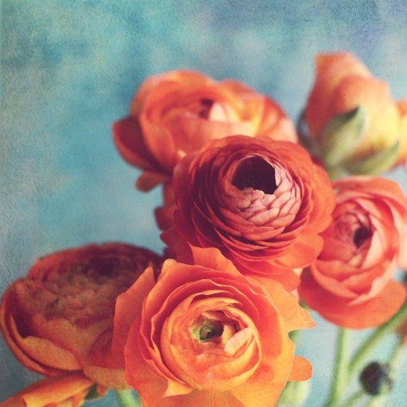 Dark Orange Wall Art Flower Photography French Farmhouse Decor Ranunculus Print