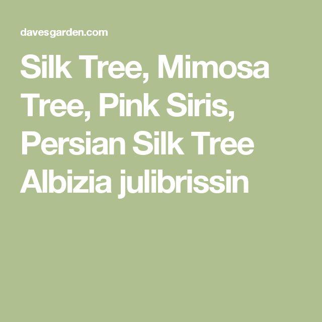 Silk Tree, Mimosa Tree, Pink Siris, Persian Silk Tree Albizia julibrissin