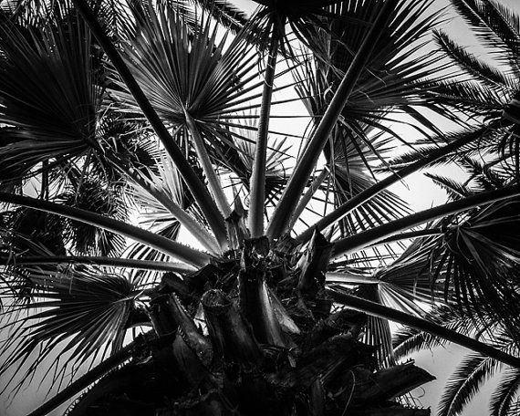 8x10 Black and White Print Beautiful View Of The by PelliculArt