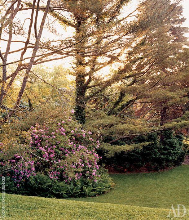 Вдоль газона высажены белые сосны, папоротники и ярко-розовый рододендрон.