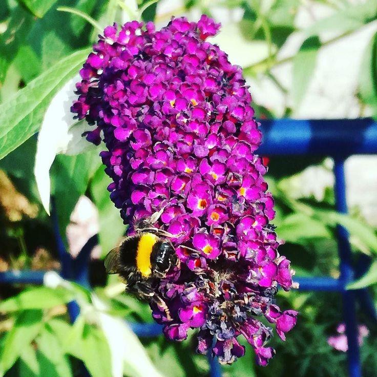 Pszczółka przy pracy  #lato #kwiaty #dianapozytywnie
