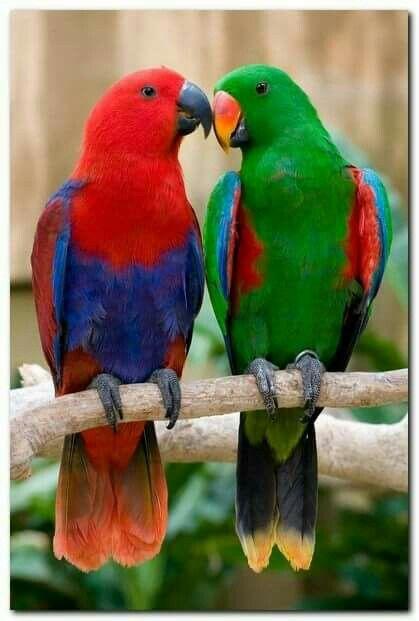 Loving Parrots.