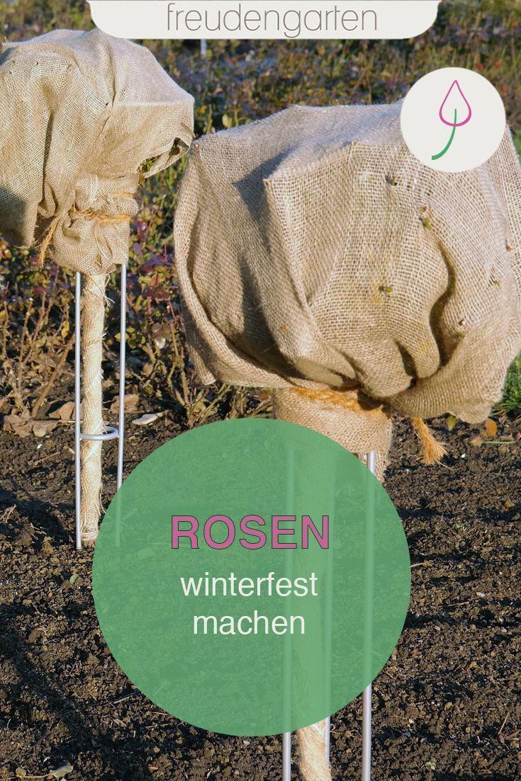 Rosen Winterfest Machen 8 Tipps Rosen Uberwintern Winterfest Machen Hochstammrosen