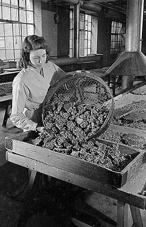 A woman unloading nut brittle from a sieve into a pallet at Barratt's Confectionery Works in Wood Green