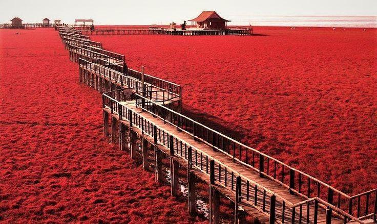Panjin Red Beach: la spettacolare spiaggia rossa della Cina #Cina, #Natura, #PanjinRedBeach, #SpiaggiaRossa, #Viaggiare, #Viaggio http://travel.cudriec.com/?p=5030
