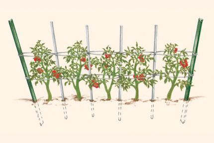 """Florida Weave"" and other tomato support techniques"