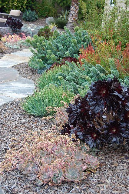 Succulent garden | Flickr - Photo Sharing!