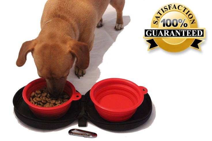 Ivanka the Chiweenie eating from her Northern Outback Travel Pet Bowl Kit