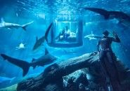 Airbnb aluga quarto debaixo d'água dentro de aquário de tubarões