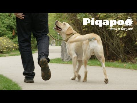 Invention a Day - Episode #56: Piqapoo  This convenient invention will catch your dog's poo, so you will not have to pick it up. You can pre-order this invention today, here's the direct link: http://qb00Krae.kckb.st
