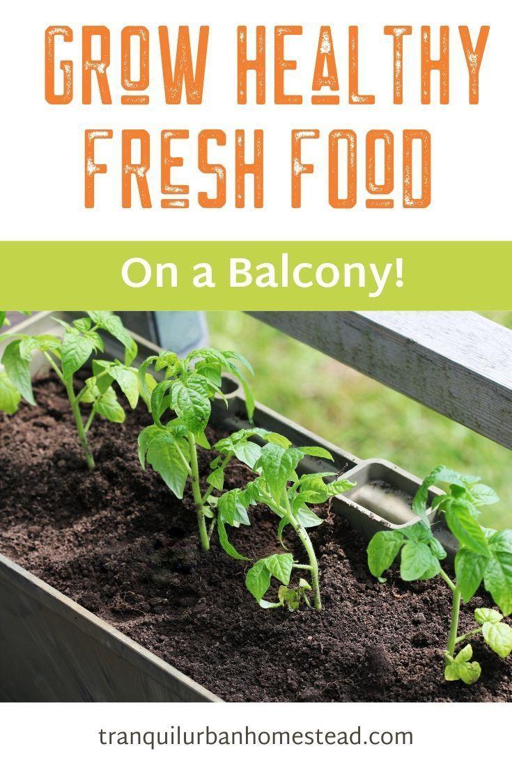 Haben Sie Mieten Oder Eine Wohnung Besitzen Und Nur Einen Kleinen Balkon Sie Konnen Einen Balkon Garten Setup Small Balcony Garden Garden Guide Balcony Garden