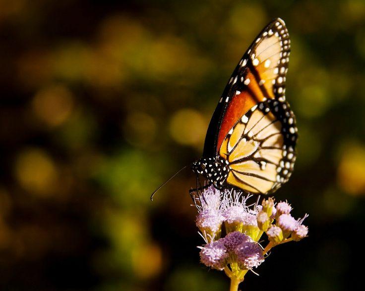 17 Best Ideas About Purple Wallpaper On Pinterest: 17 Best Ideas About Butterfly Wallpaper On Pinterest