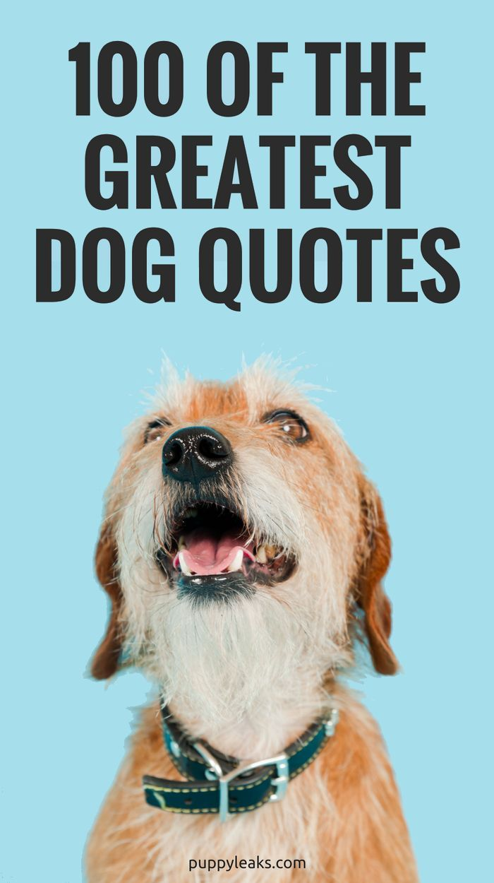 100 Of The Best Dog Inspired Quotes Dog Quotes Funny Dog Quotes Puppy Quotes