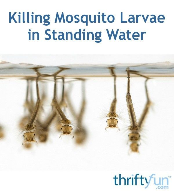 7fcb6477822d9c84735e1d9487c61b1c - How To Get Rid Of Mosquito Larvae In Water Feature