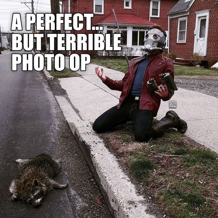 A perfect but terrible photo op | Star-Lord and Raccoon | I'm going to hell for laughing, but there's nothing more we can do for the raccoon.