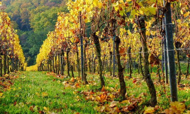 Fall in #Pfalz.  © LL www.kingscreek.de