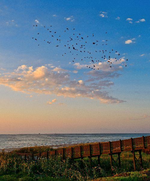 Mustang Island Beach: 17 Best Images About Port Aransas: Beach On Pinterest