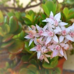 Долгоцветущие и красивые комнатные растения в горшках выращиваемые дома